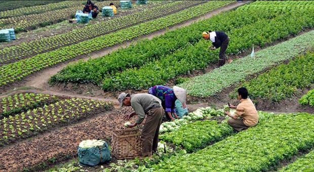 Tarımda 5,5 milyon kişi üretim yapıyor
